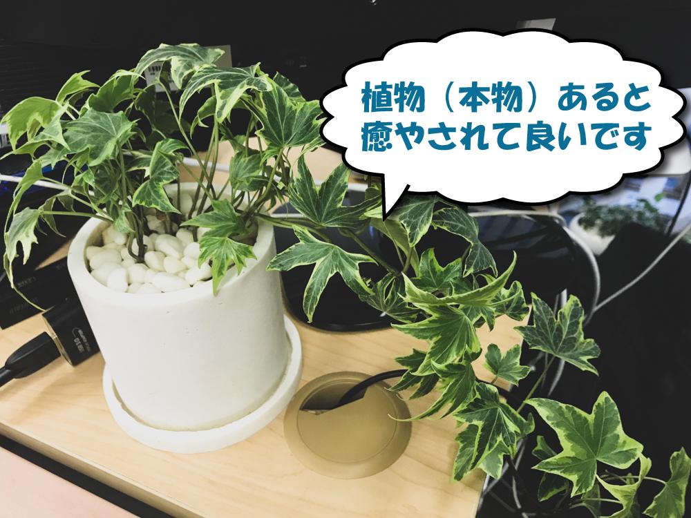 オフィスデスクに観葉植物