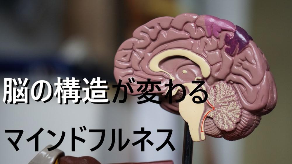 マインドフルネス 脳 構造